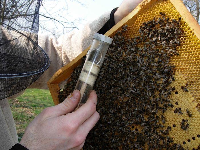 5 kérdés a mézről